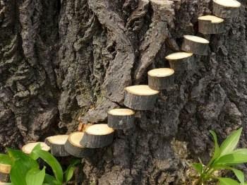 Stytlish Miniature Fairy Garden Ideas19