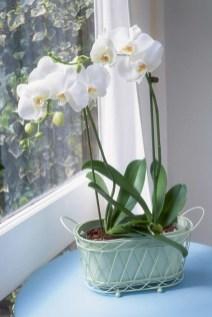 Superb Indoor Garden Designs Ideas For Home19