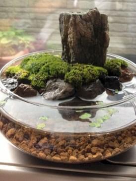 Superb Indoor Garden Designs Ideas For Home25