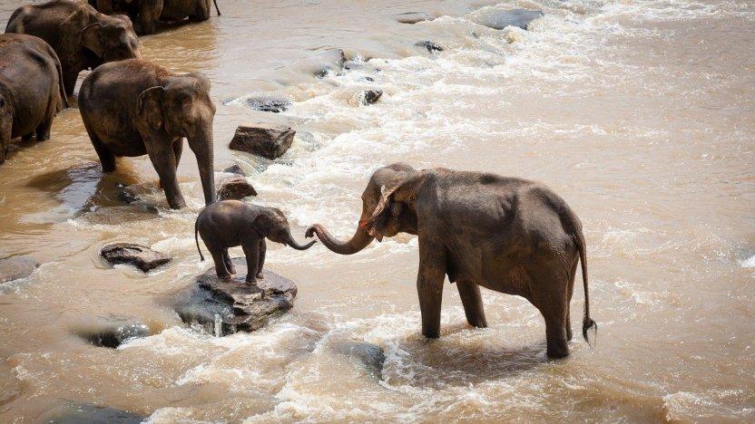 Biodiversidad. Familia de elefantes
