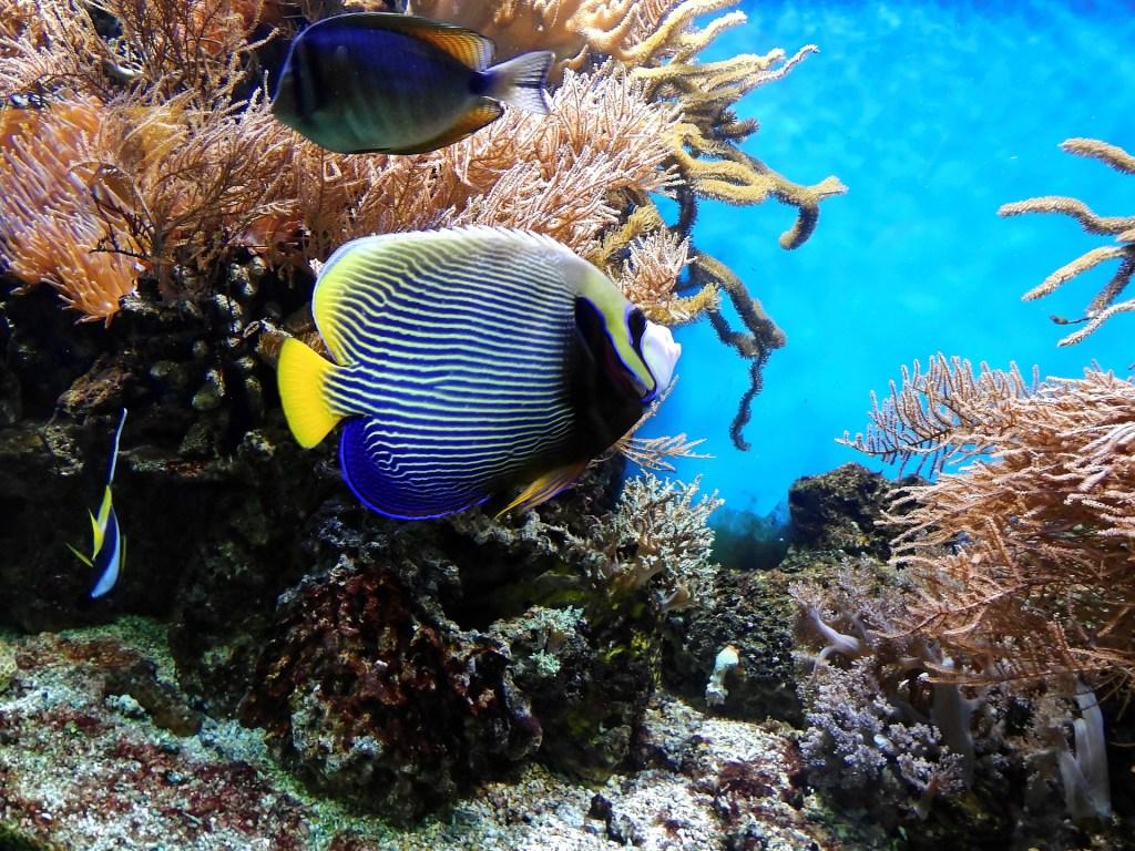 Biodiversidad. Coral y peces