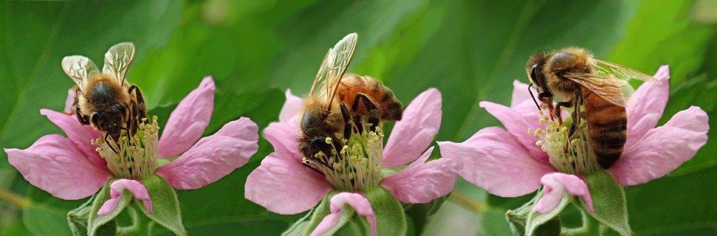 abejas en las flores