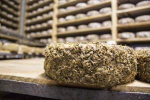 A Sbirro cheese round