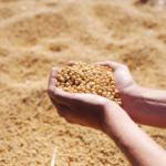 Jakie składniki<br> zawiera soja?